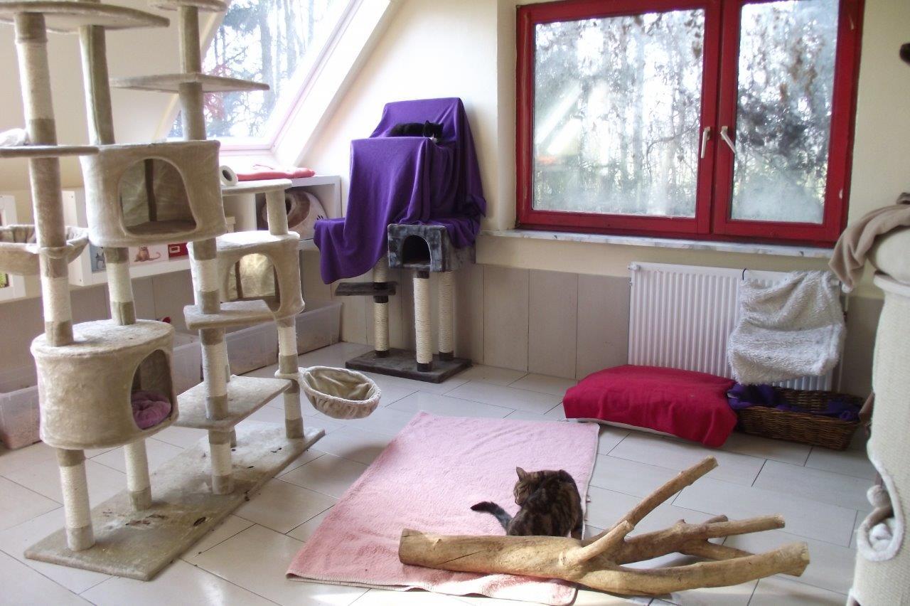Sanierung katzenwohnung for Wohnung dekorieren mit katzen