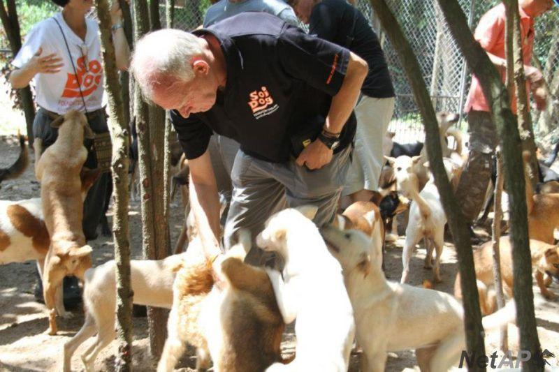 gerettete hunde in italien